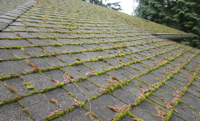 Roof Maintenance Tips Things You Need To Do To Make Your Roof Stormproof - Be aware of moss